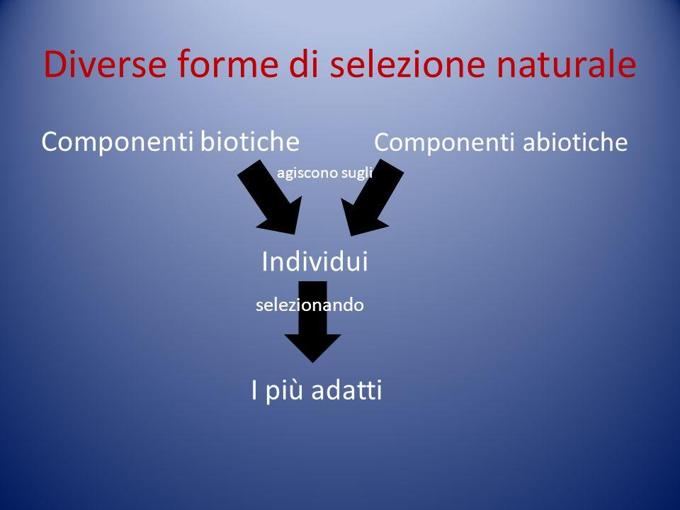 Diverse forme di selezione naturale Componenti biotiche Componenti abiotiche Individui agiscono sugli I più adatti selezionando