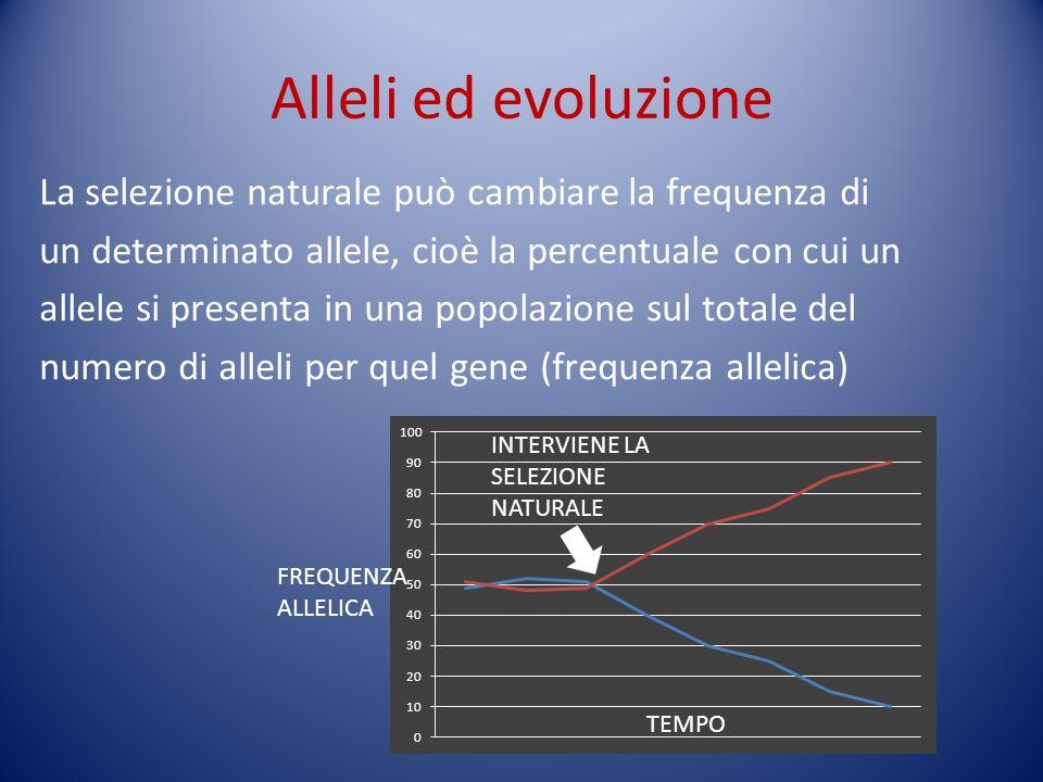 Alleli ed evoluzione La selezione naturale può cambiare la frequenza di un determinato allele, cioè la percentuale con cui un allele si presenta in un
