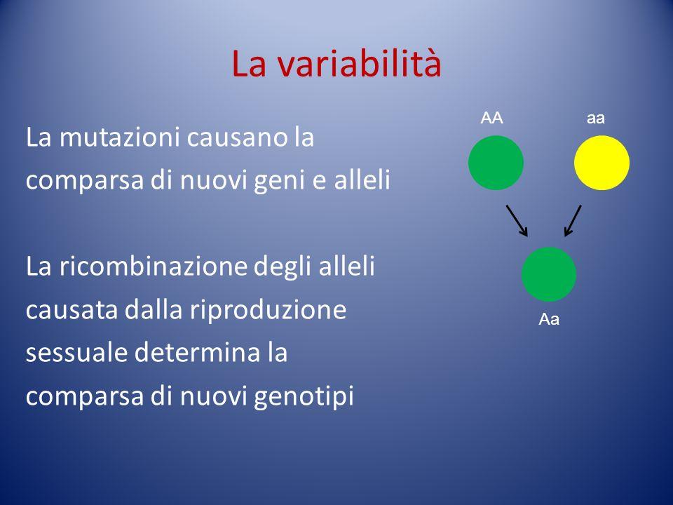 La variabilità La mutazioni causano la comparsa di nuovi geni e alleli La ricombinazione degli alleli causata dalla riproduzione sessuale determina la