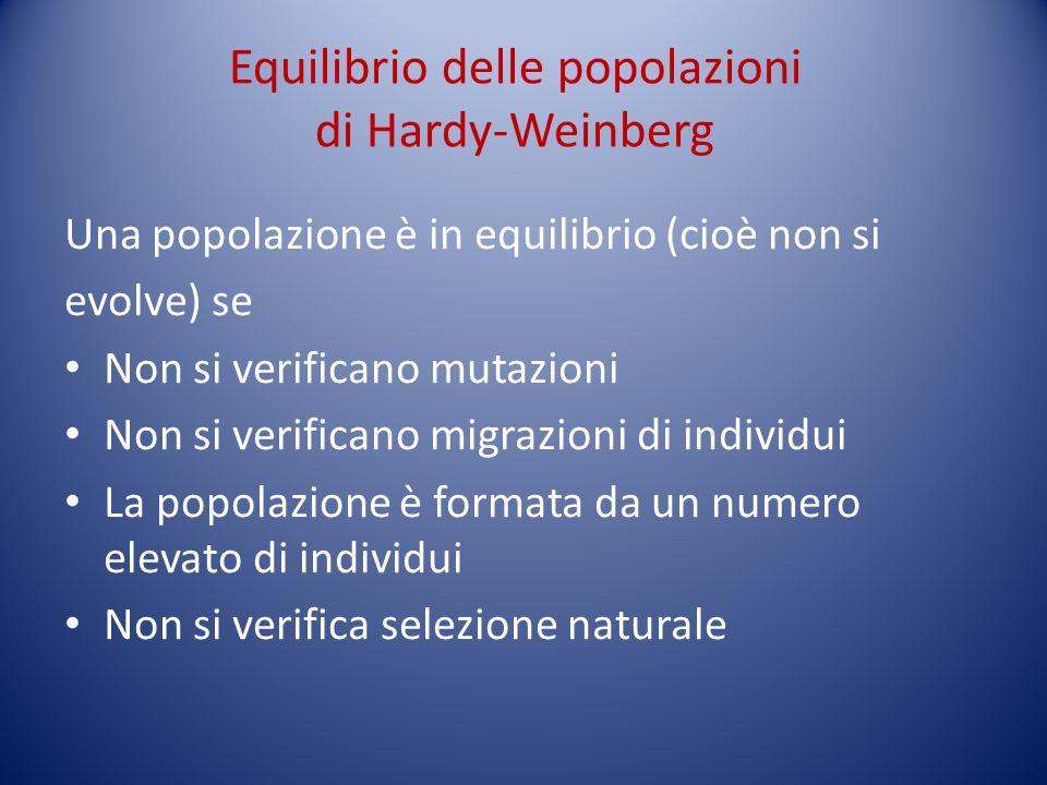 Equilibrio delle popolazioni di Hardy-Weinberg Una popolazione è in equilibrio (cioè non si evolve) se Non si verificano mutazioni Non si verificano m