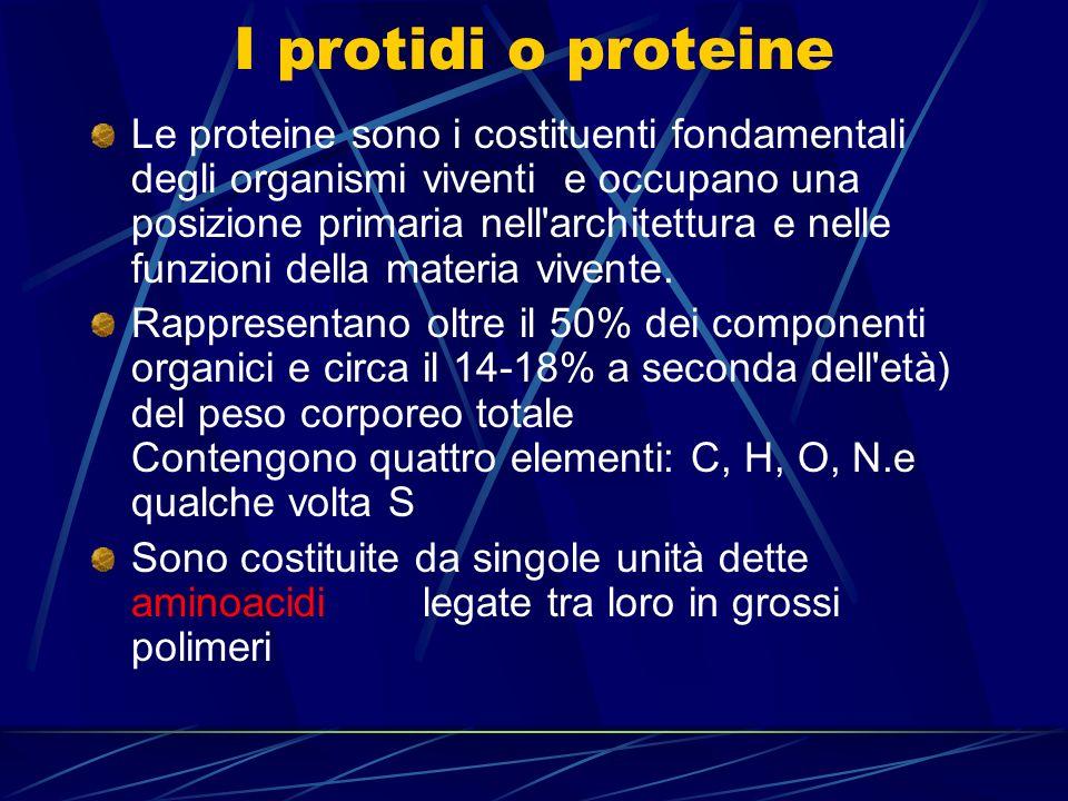 I protidi o proteine Le proteine sono i costituenti fondamentali degli organismi viventi e occupano una posizione primaria nell'architettura e nelle f