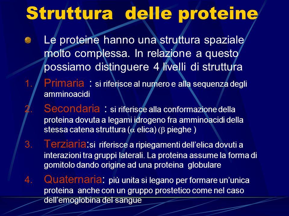 Struttura delle proteine Le proteine hanno una struttura spaziale molto complessa. In relazione a questo possiamo distinguere 4 livelli di struttura 1