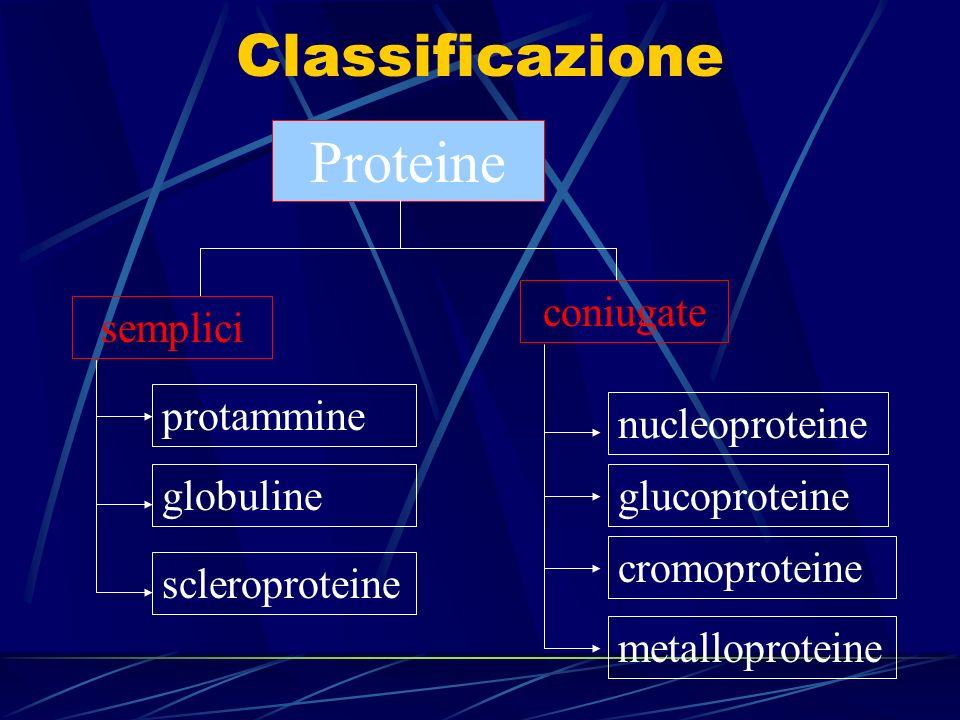 VALORE BIOLOGICO DELLE PROTEINE Le proteine che contengono tutti gli amminoacidi essenziali sono dette nobili e sono quelle presenti negli alimenti animali come la carne,il pesce, il latte e uova Il valore biologico di una proteina è la quantità di azoto in essa contenuto, che viene trattenuto dall organismo per la crescita cellulare,per la riparazione dei tessuti e per mantenimento delle funzioni vitali e non viene escreto con le feci, le urine o attraverso la pelle Il valore biologico è definito come: BV = quantità azoto introdotto / quantità azoto assorbito*100 = 100 Una proteina che possiede un perfetto equilibrio di aminoacidi assorbiti per il 100% e trattenuti per le funzioni dell organismo ha un valore biologico di 100.