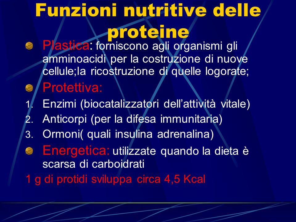 Funzioni nutritive delle proteine Plastica: forniscono agli organismi gli amminoacidi per la costruzione di nuove cellule;la ricostruzione di quelle l