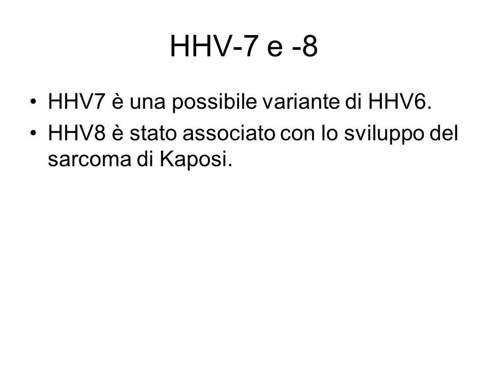 HHV-7 e -8 HHV7 è una possibile variante di HHV6. HHV8 è stato associato con lo sviluppo del sarcoma di Kaposi.