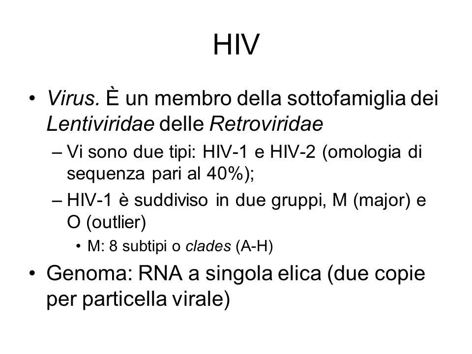 HIV Virus. È un membro della sottofamiglia dei Lentiviridae delle Retroviridae –Vi sono due tipi: HIV-1 e HIV-2 (omologia di sequenza pari al 40%); –H