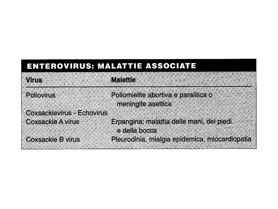 Prevenzione e controllo Contro la poliomielite sono disponibili sia il vaccino a virus vivo (Sabin) che quello a virus ucciso (Salk)