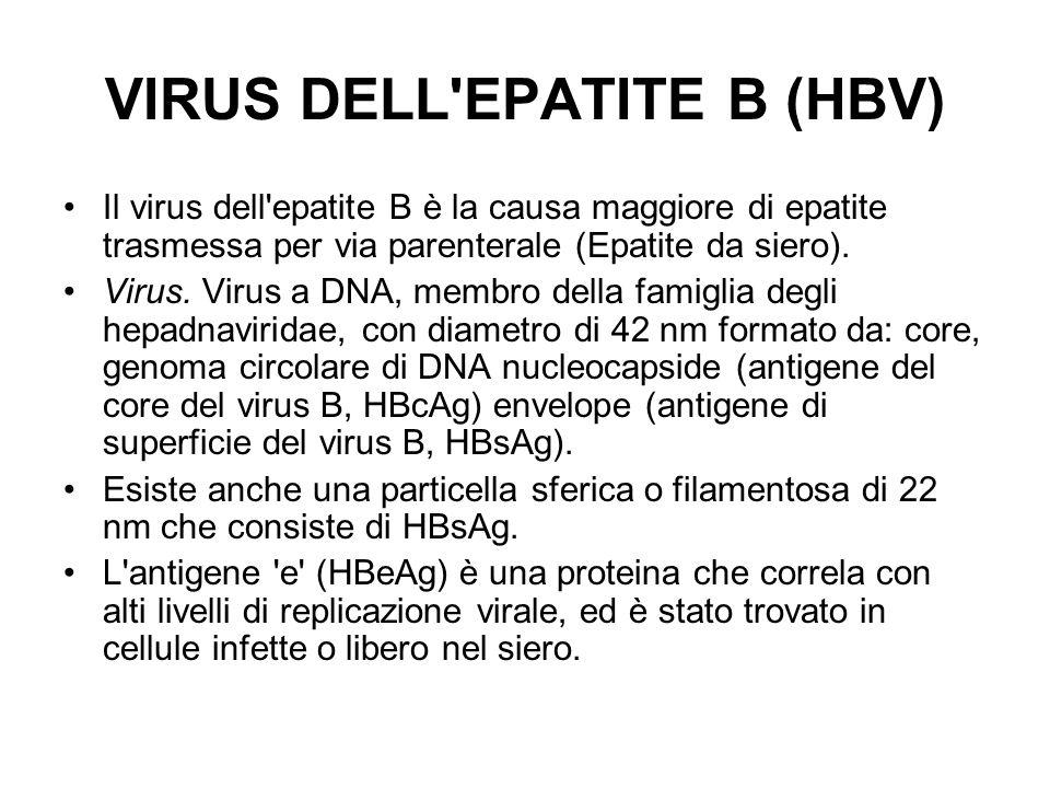 VIRUS DELL'EPATITE B (HBV) Il virus dell'epatite B è la causa maggiore di epatite trasmessa per via parenterale (Epatite da siero). Virus. Virus a DNA