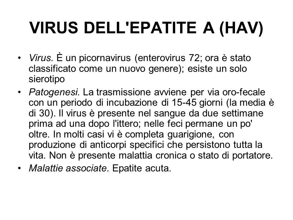 VIRUS DELL'EPATITE A (HAV) Virus. È un picornavirus (enterovirus 72; ora è stato classificato come un nuovo genere); esiste un solo sierotipo Patogene