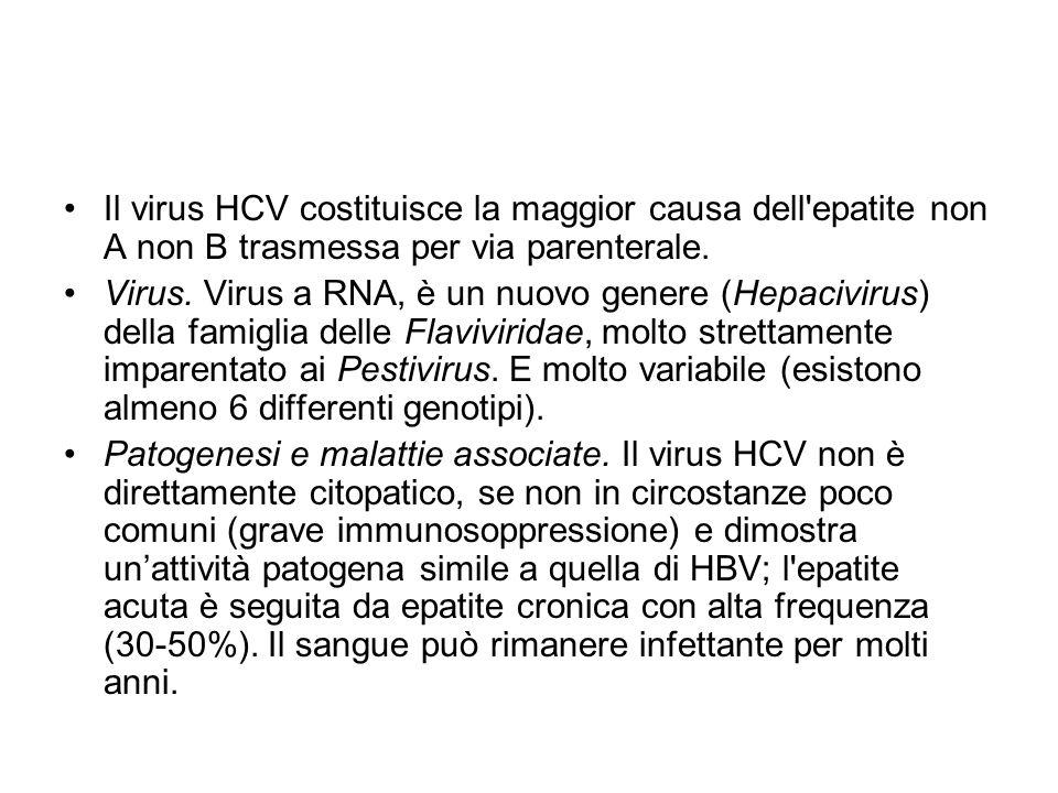 Il virus HCV costituisce la maggior causa dell'epatite non A non B trasmessa per via parenterale. Virus. Virus a RNA, è un nuovo genere (Hepacivirus)