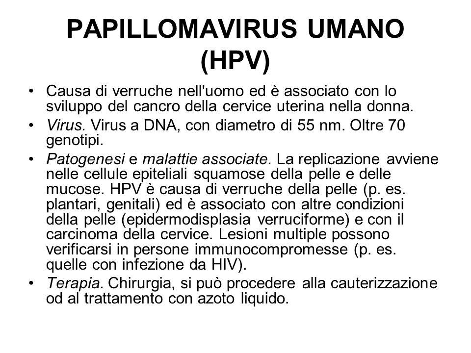 PAPILLOMAVIRUS UMANO (HPV) Causa di verruche nell'uomo ed è associato con lo sviluppo del cancro della cervice uterina nella donna. Virus. Virus a DNA