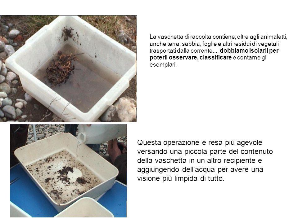 La vaschetta di raccolta contiene, oltre agli animaletti, anche terra, sabbia, foglie e altri residui di vegetali trasportati dalla corrente.... dobbi