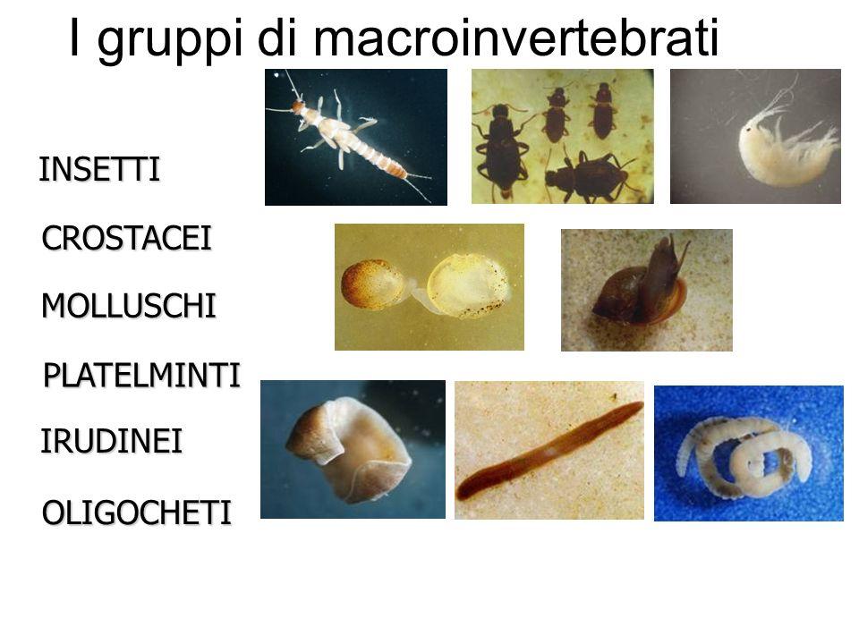PlecotteriEfemerotteriTricotteriOdonatiEterotteriColeotteriDitteri I gruppi di insetti: