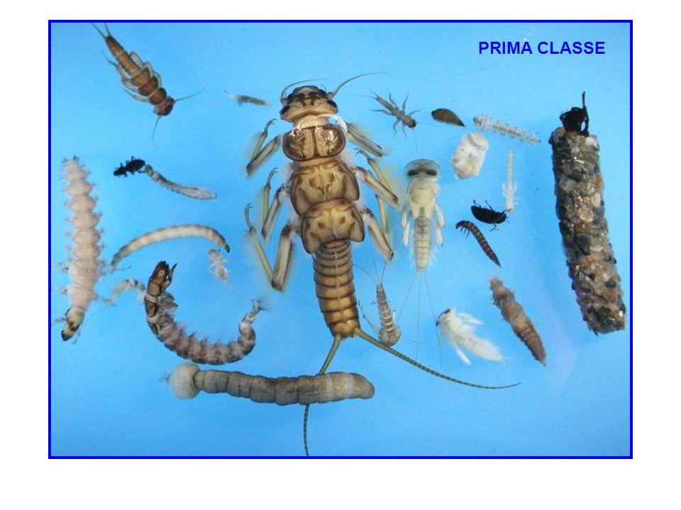 PRIMA CLASSE