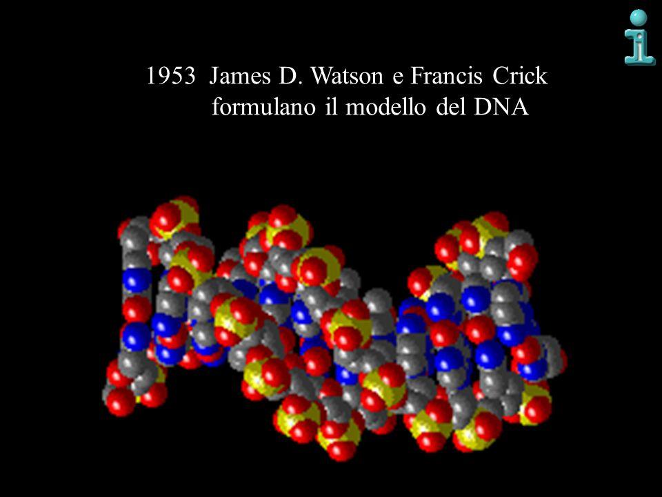 1953 James D. Watson e Francis Crick formulano il modello del DNA
