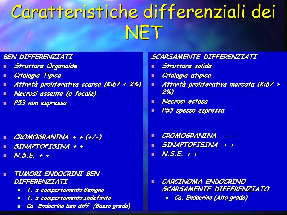 Caratteristiche differenziali dei NET BEN DIFFERENZIATI Struttura Organoide Struttura Organoide Citologia Tipica Citologia Tipica Attività proliferati