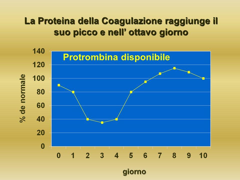 La Proteina della Coagulazione raggiunge il suo picco e nell ottavo giorno Protrombina disponibile