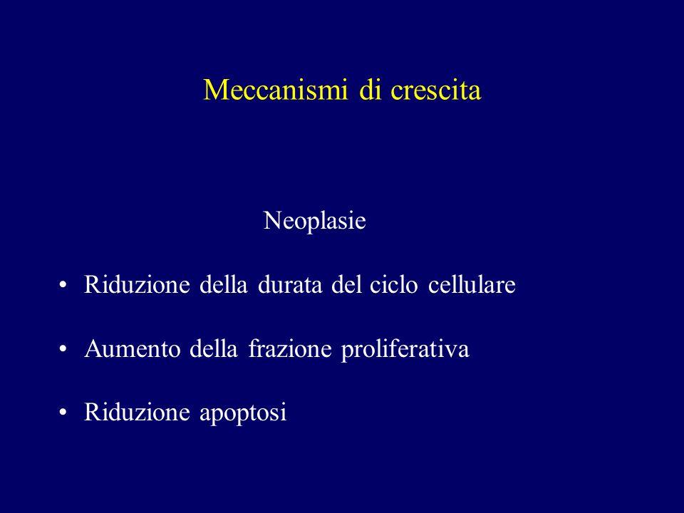 Carcinoma adenoido-cistico Aspetti macroscopici Ben circoscritto Tumore solido Pattern infiltrativo