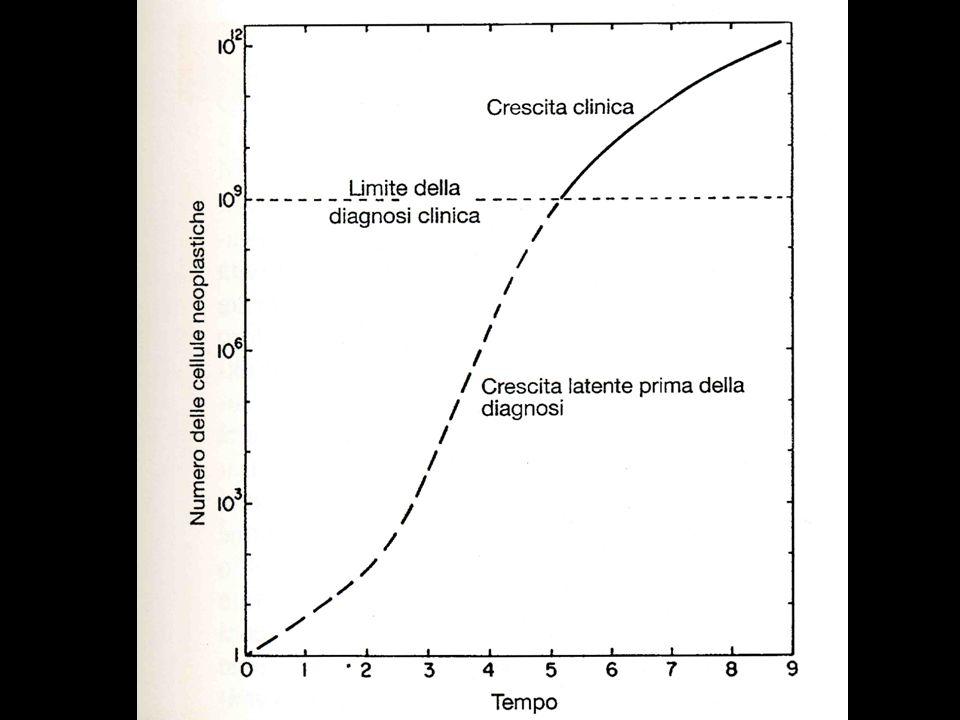 Carcinoma adenoido-cistico Aspetti istologici Pattern cribriforme -più comune -aspetto swiss cheese
