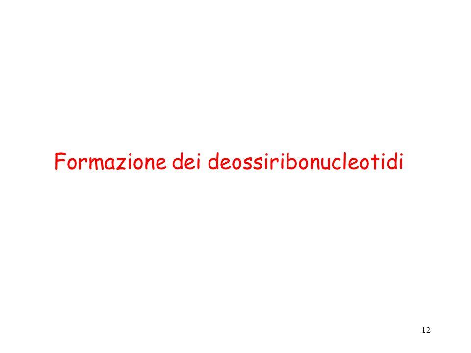 12 Formazione dei deossiribonucleotidi