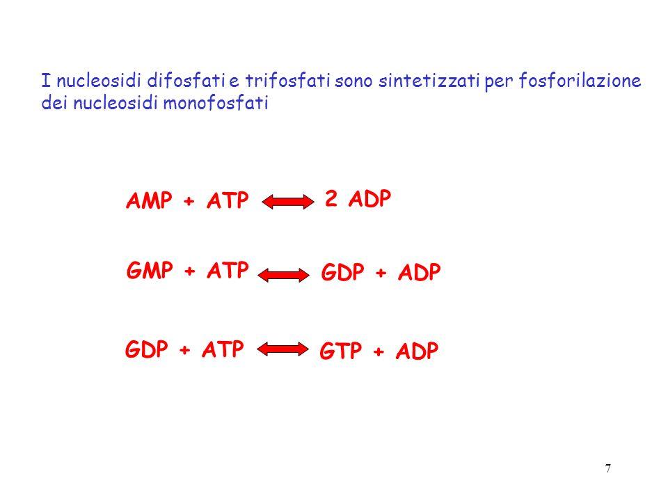7 I nucleosidi difosfati e trifosfati sono sintetizzati per fosforilazione dei nucleosidi monofosfati AMP + ATP 2 ADP GMP + ATP GDP + ADP GDP + ATP GT