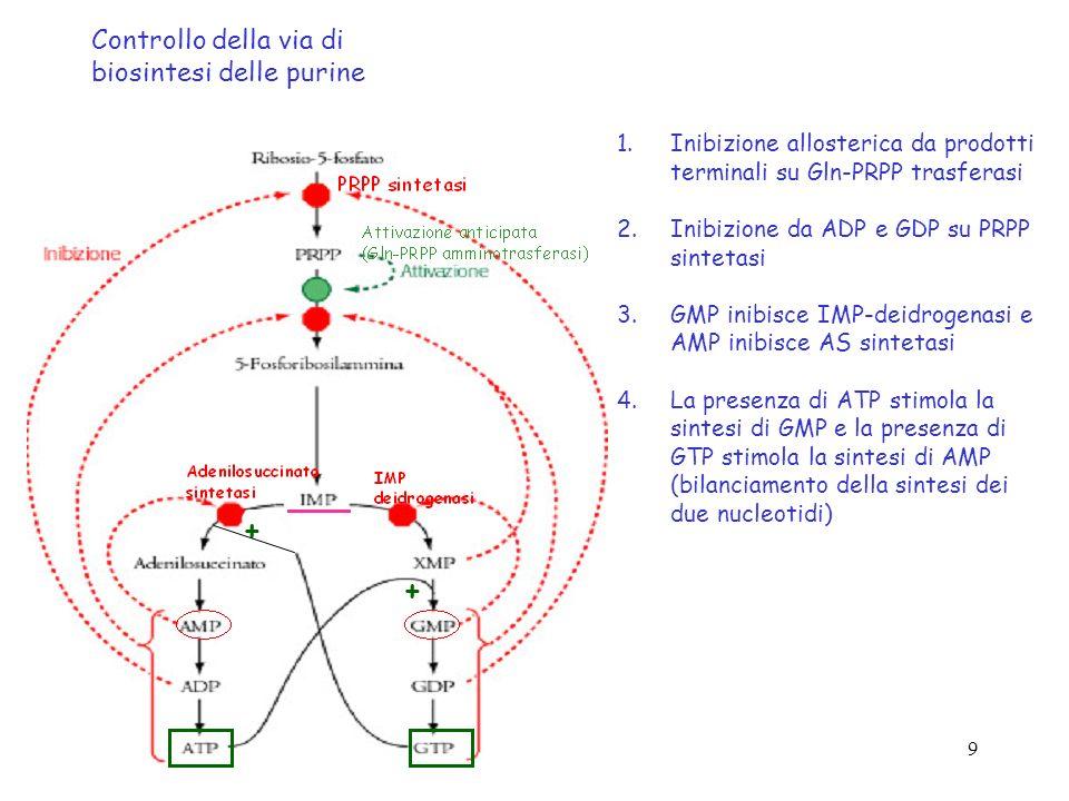 9 Controllo della via di biosintesi delle purine 1.Inibizione allosterica da prodotti terminali su Gln-PRPP trasferasi 2.Inibizione da ADP e GDP su PR