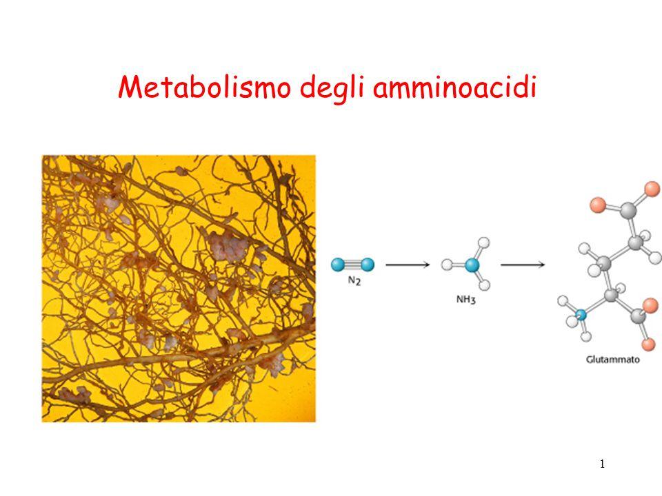 1 Metabolismo degli amminoacidi