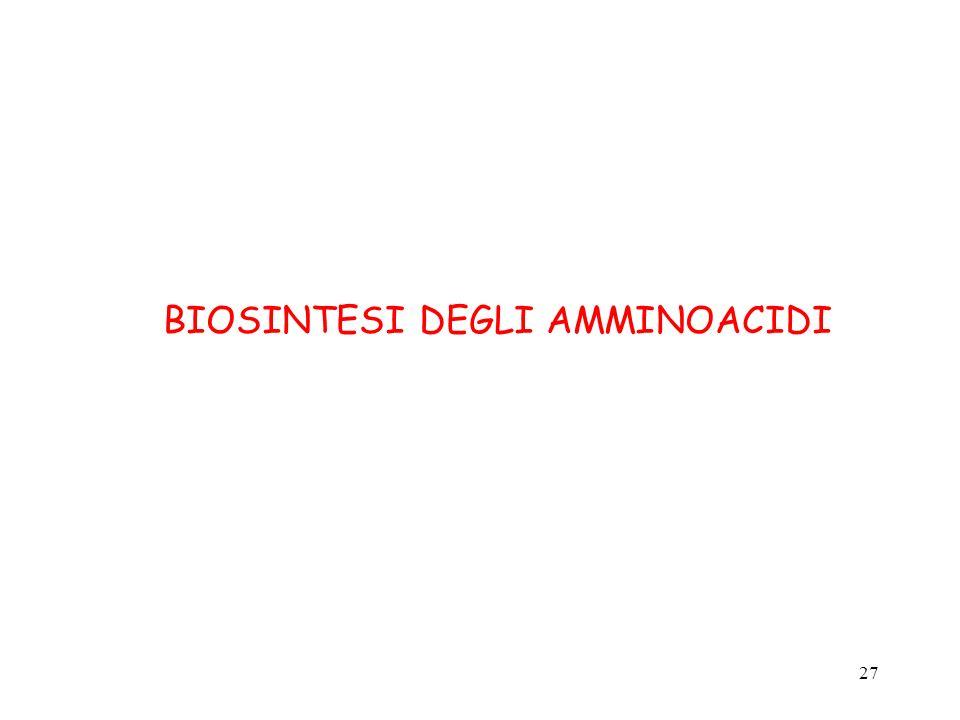 27 BIOSINTESI DEGLI AMMINOACIDI