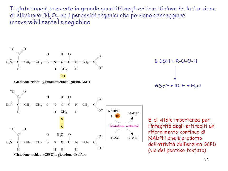 32 Il glutatione è presente in grande quantità negli eritrociti dove ha la funzione di eliminare lH 2 O 2 ed i perossidi organici che possono danneggi