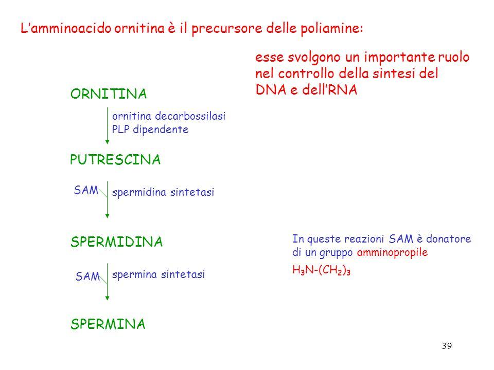 39 In queste reazioni SAM è donatore di un gruppo amminopropile H 3 N-(CH 2 ) 3 Lamminoacido ornitina è il precursore delle poliamine: ORNITINA PUTRES