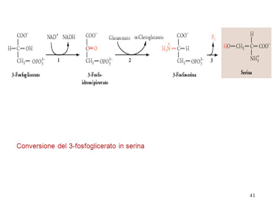 41 Conversione del 3-fosfoglicerato in serina