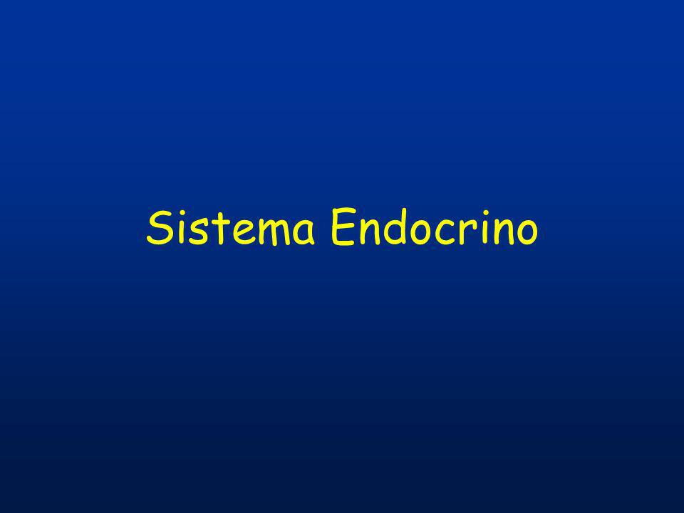 Regolazione della secrezione ormonale Lattività secretoria dei tessuti endocrini è controllata con un meccanismo a feedback negativo.