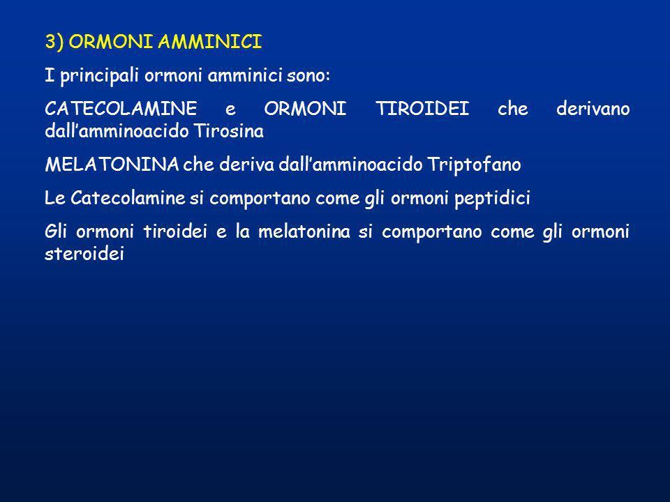 3) ORMONI AMMINICI I principali ormoni amminici sono: CATECOLAMINE e ORMONI TIROIDEI che derivano dallamminoacido Tirosina MELATONINA che deriva dalla