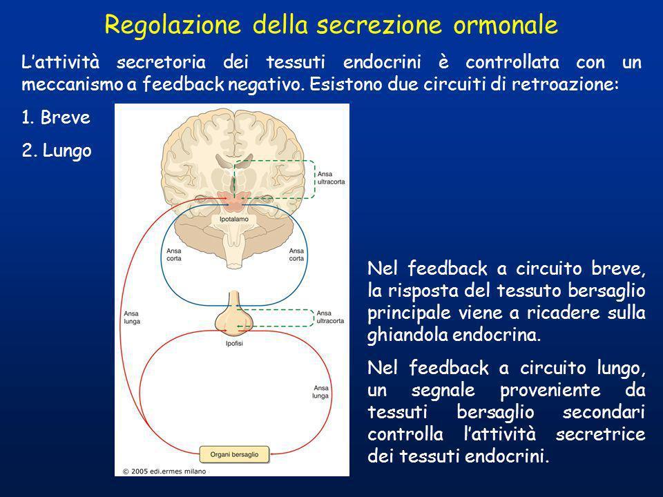 Regolazione della secrezione ormonale Lattività secretoria dei tessuti endocrini è controllata con un meccanismo a feedback negativo. Esistono due cir