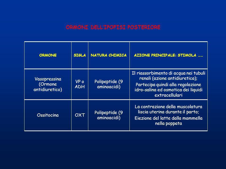 AZIONE PRINCIPALE: STIMOLA ……NATURA CHIMICASIGLAORMONE Il riassorbimento di acqua nei tubuli renali (azione antidiuretica); Partecipa quindi alla rego