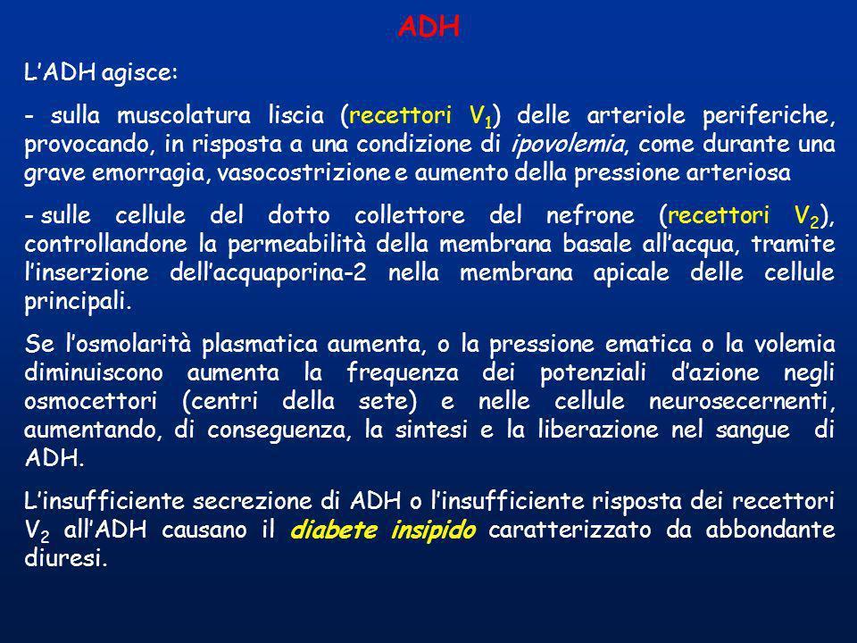 ADH LADH agisce: - sulla muscolatura liscia (recettori V 1 ) delle arteriole periferiche, provocando, in risposta a una condizione di ipovolemia, come