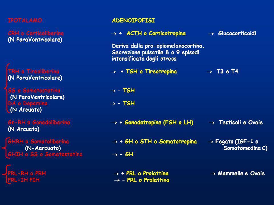 IPOTALAMOADENOIPOFISI CRH o Corticoliberina + ACTH o Corticotropina Glucocorticoidi (N ParaVentricolare) Deriva dalla pro-opiomelanocortina. Secrezion