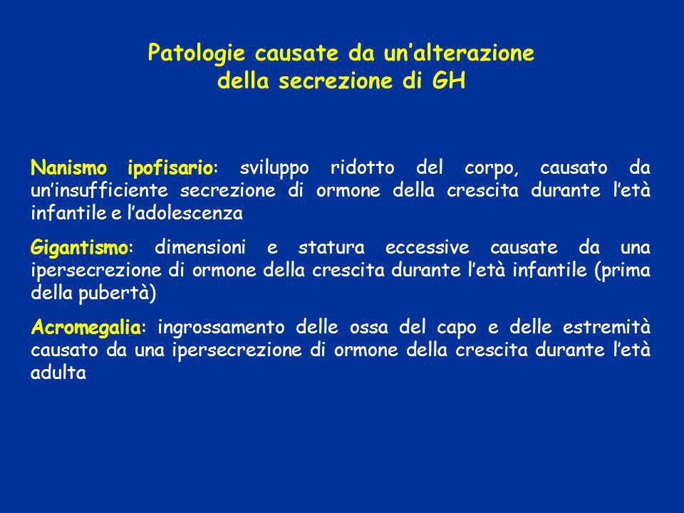 Nanismo ipofisario: sviluppo ridotto del corpo, causato da uninsufficiente secrezione di ormone della crescita durante letà infantile e ladolescenza G
