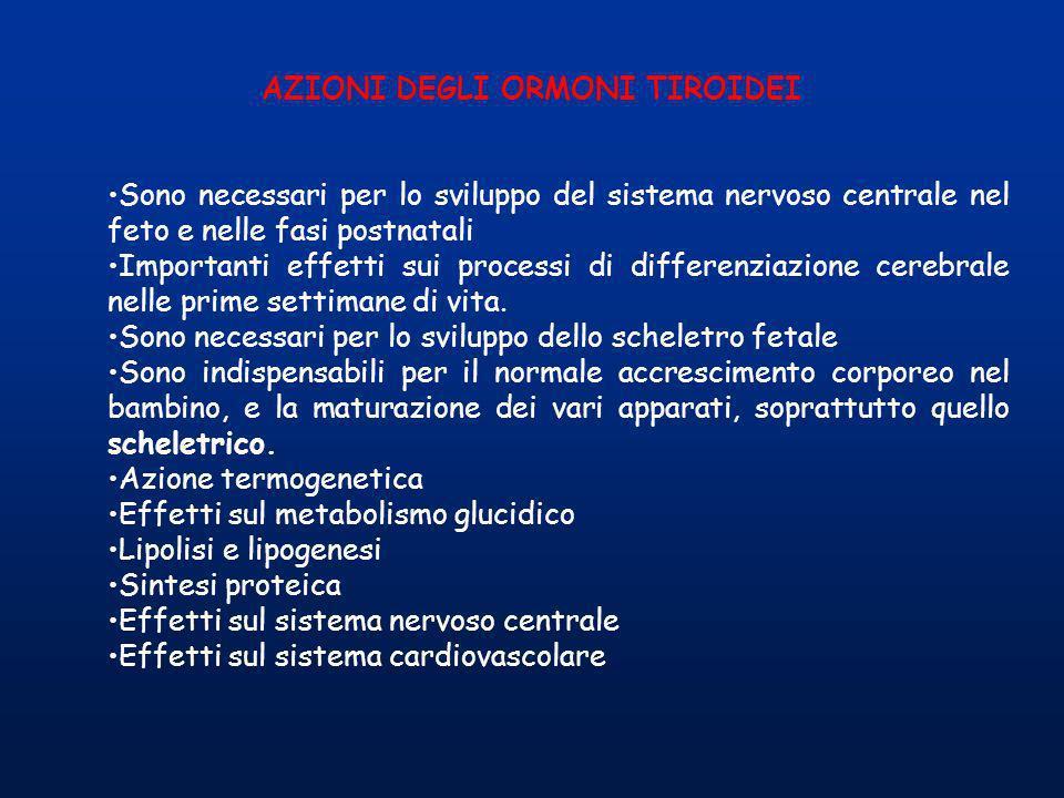 AZIONI DEGLI ORMONI TIROIDEI Sono necessari per lo sviluppo del sistema nervoso centrale nel feto e nelle fasi postnatali Importanti effetti sui proce