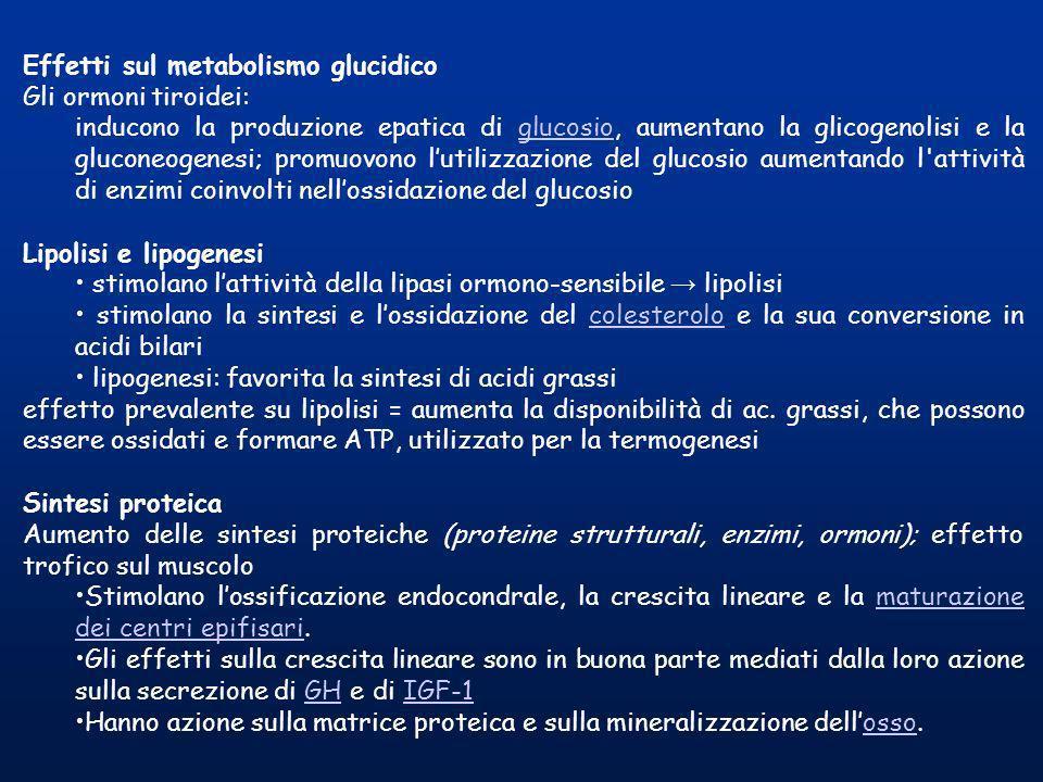 Effetti sul metabolismo glucidico Gli ormoni tiroidei: inducono la produzione epatica di glucosio, aumentano la glicogenolisi e la gluconeogenesi; pro