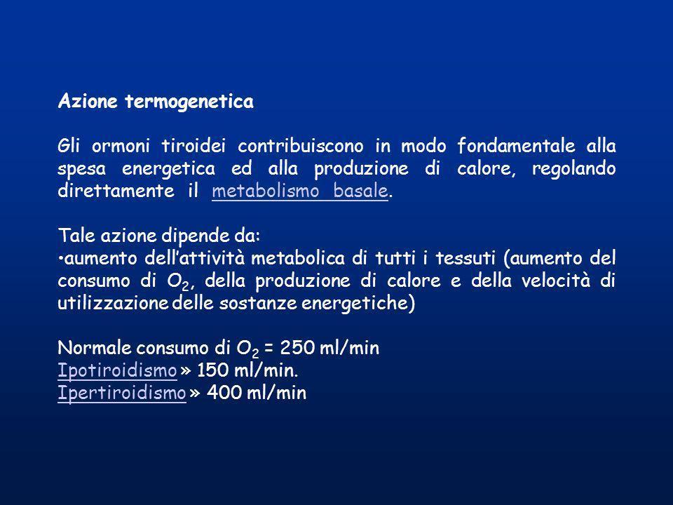 Azione termogenetica Gli ormoni tiroidei contribuiscono in modo fondamentale alla spesa energetica ed alla produzione di calore, regolando direttament