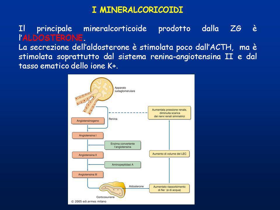 I MINERALCORICOIDI Il principale mineralcorticoide prodotto dalla ZG è lALDOSTERONE. La secrezione dellaldosterone è stimolata poco dallACTH, ma è sti