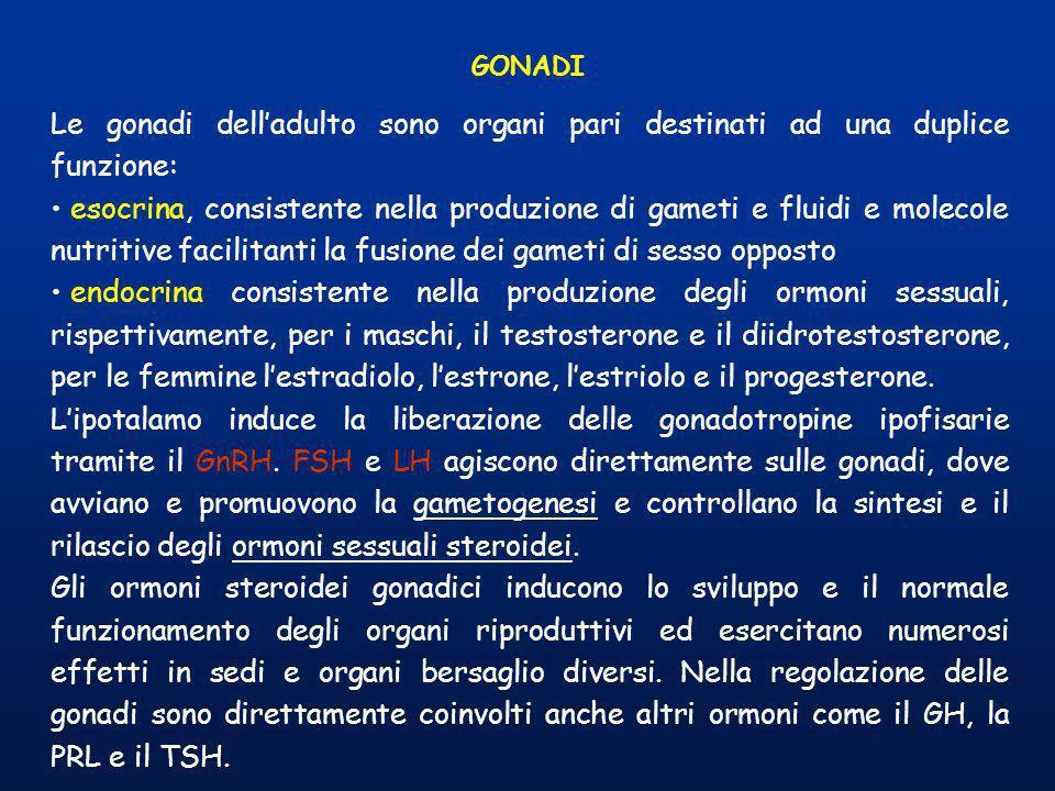GONADI Le gonadi delladulto sono organi pari destinati ad una duplice funzione: esocrina, consistente nella produzione di gameti e fluidi e molecole n