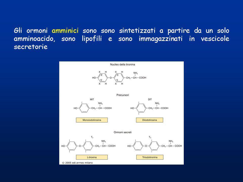 Struttura degli ormoni tiroidei e dei composti correlati Nel processo di sintesi degli ormoni tiroidei si possono formare anche molecole diverse da T3 e T4, che vengono però metabolizzate allinterno del tireocita, recuperando lo IODIO ed il residuo tirosinico.