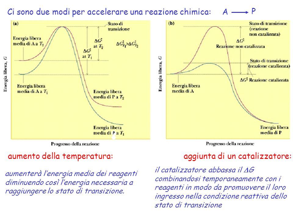 aumento della temperatura:aggiunta di un catalizzatore: Ci sono due modi per accelerare una reazione chimica: P aumenterà lenergia media dei reagenti