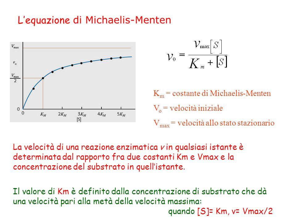 Lequazione di Michaelis-Menten K m = costante di Michaelis-Menten V o = velocità iniziale V max = velocità allo stato stazionario La velocità di una r