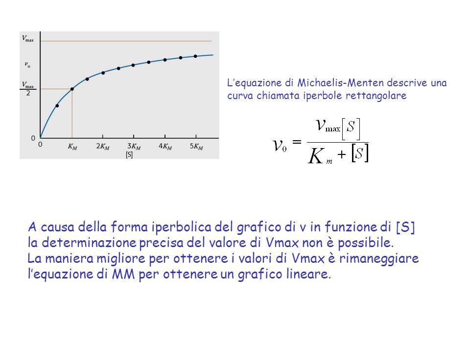 Lequazione di Michaelis-Menten descrive una curva chiamata iperbole rettangolare A causa della forma iperbolica del grafico di v in funzione di [S] la