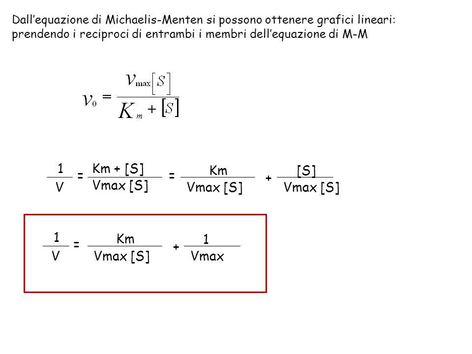 Dallequazione di Michaelis-Menten si possono ottenere grafici lineari: prendendo i reciproci di entrambi i membri dellequazione di M-M 1 V = Km + [S]