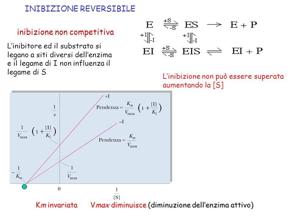 inibizione non competitiva Km invariata Vmax diminuisce (diminuzione dellenzima attivo) INIBIZIONE REVERSIBILE Linibitore ed il substrato si legano a