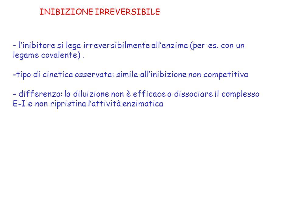 - linibitore si lega irreversibilmente allenzima (per es. con un legame covalente). -tipo di cinetica osservata: simile allinibizione non competitiva